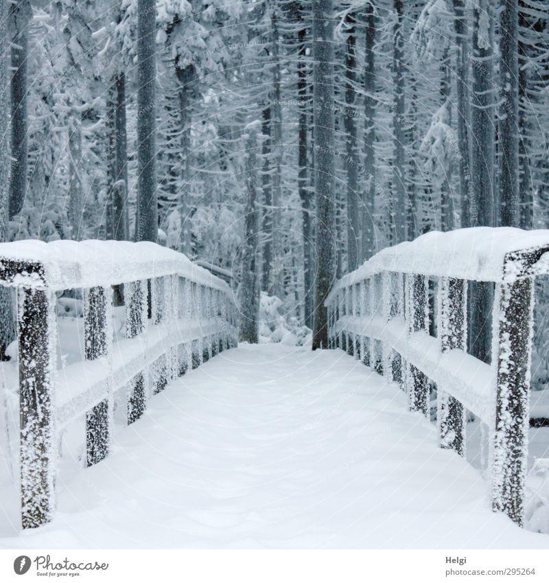 700 | Übergang... Ferien & Urlaub & Reisen Tourismus Ausflug Winter Schnee Winterurlaub Berge u. Gebirge wandern Harz Brocken Umwelt Natur Landschaft Eis Frost