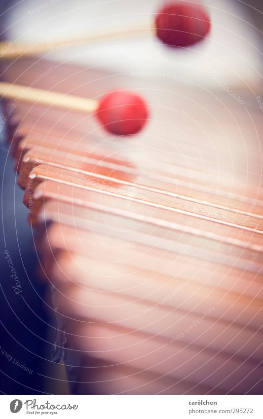 Musik rot Spielen Musikinstrument musizieren Trommelschlegel Xylophon Marimba