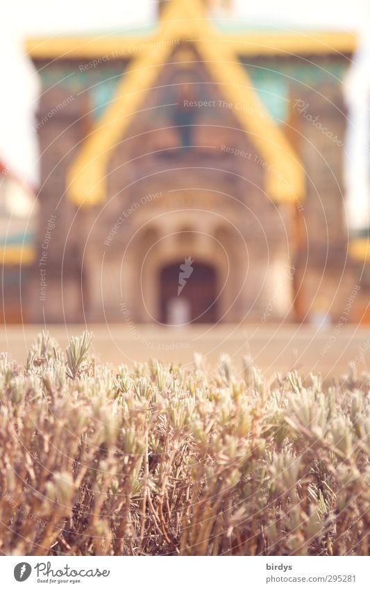 Russische Orthodoxe Kirche Tourismus Pflanze Lavendel Sehenswürdigkeit ästhetisch historisch reich Stadt gold Macht Design Dekadenz Religion & Glaube Kultur