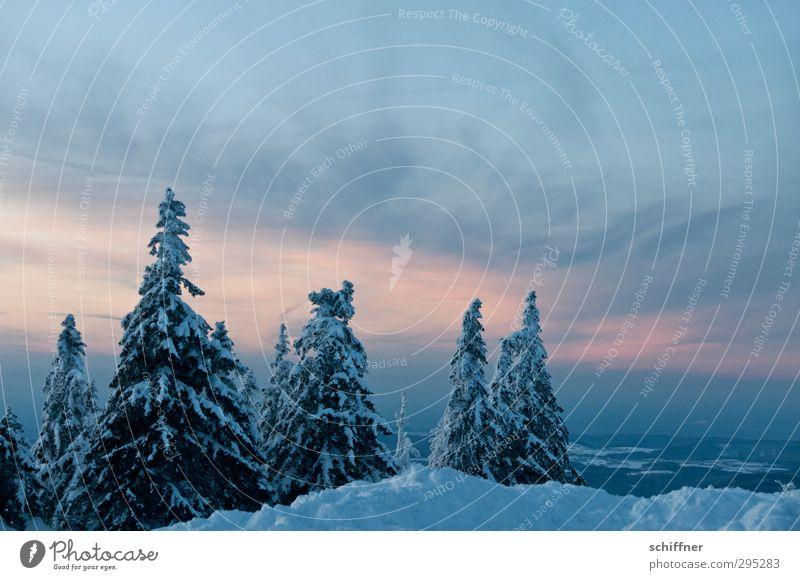 Ruhe Umwelt Natur Landschaft Pflanze Himmel Wolken Sonnenaufgang Sonnenuntergang Winter Eis Frost Schnee Baum Wald Berge u. Gebirge Gipfel Schneebedeckte Gipfel