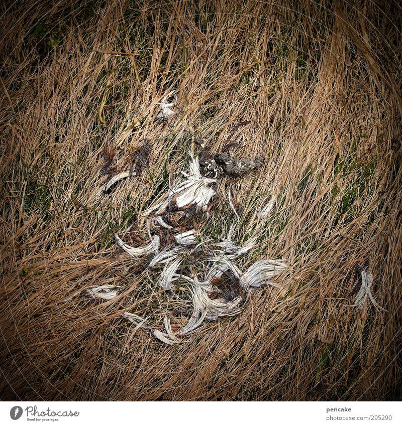 spurensuche Natur Tier Erde Frühling Winter Eis Frost Dürre Gras Zeichen Stimmung Macht Opferbereitschaft Appetit & Hunger Schmerz Gewalt Fell tierisch