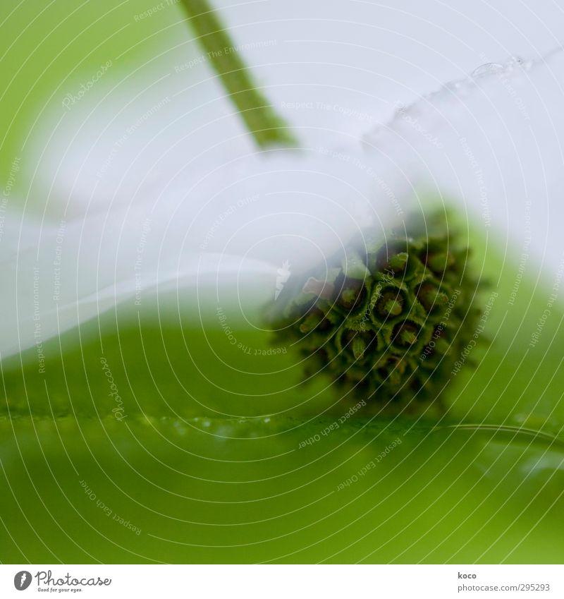 gefallen Natur grün schön Wasser weiß Sommer Pflanze Blume Blatt Frühling Traurigkeit Blüte außergewöhnlich Lifestyle frisch Wassertropfen