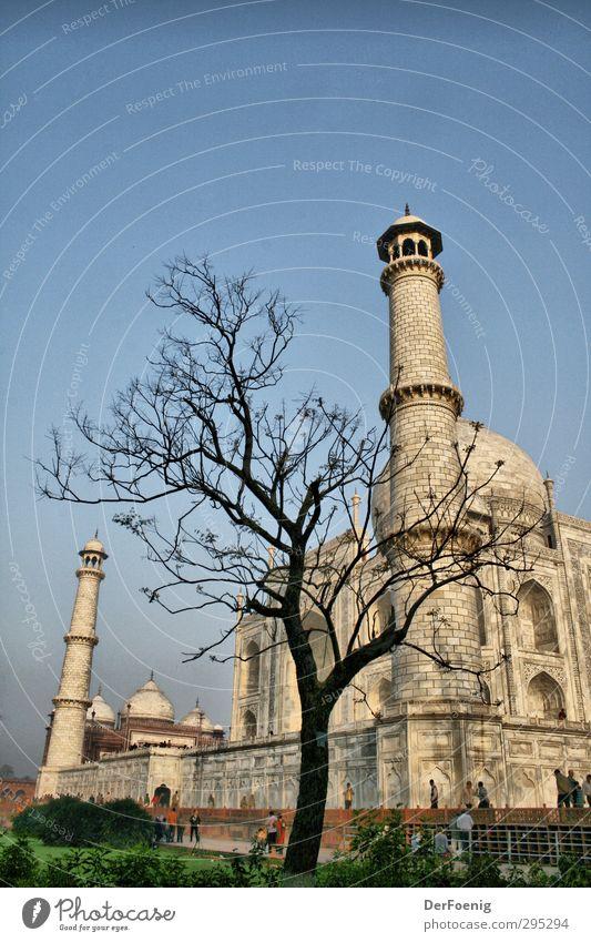 Taj Mahal Baum Agra Bauwerk Sehenswürdigkeit Wahrzeichen Denkmal Vergangenheit Farbfoto Außenaufnahme Morgen Froschperspektive