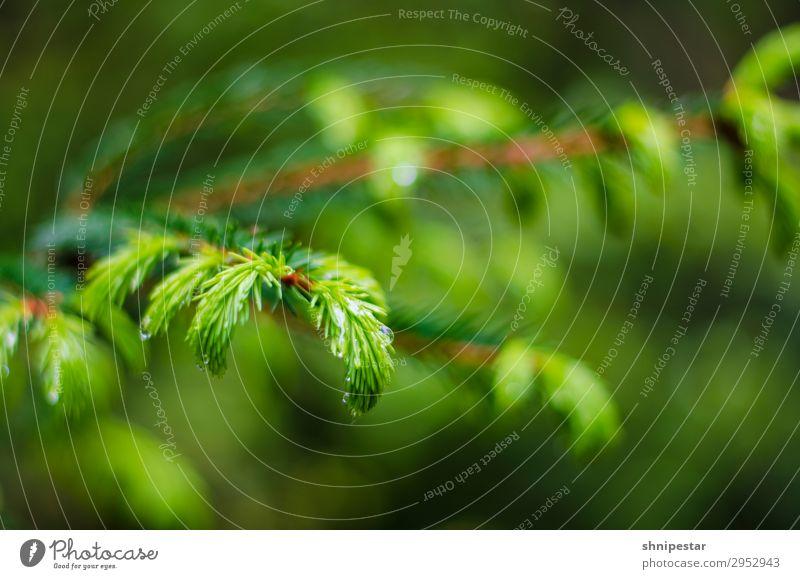 Zarte Natur Umwelt Landschaft Pflanze Urelemente Wasser Frühling Sommer Regen Baum Nadelbaum Nadelwald Wald Oybin Menschenleer entdecken Gesundheit nachhaltig