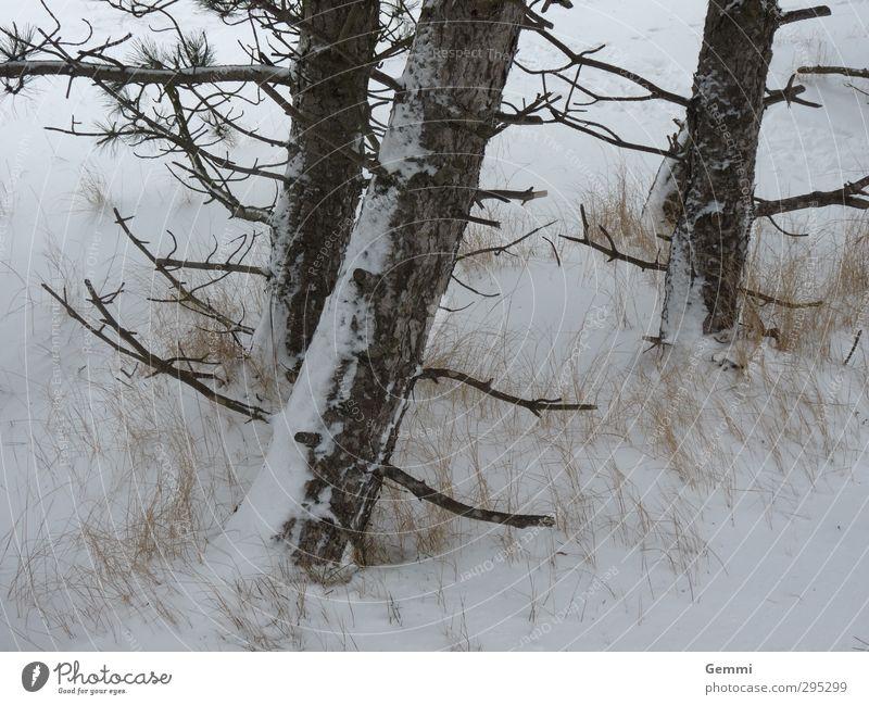 Winter im Frühling Umwelt Natur Landschaft Pflanze Erde Sand Wetter Eis Frost Schnee Schneefall Baum Strand Nordsee Insel Amrum frieren braun gelb grau weiß
