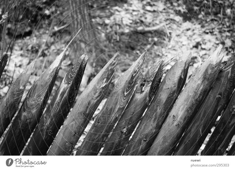//////// Häusliches Leben Garten Zaunpfahl Grundstücksgrenze Gartenarbeit Landschaft Herbst Wald Holz alt fest Spitze trist grau schwarz weiß Sicherheit Schutz