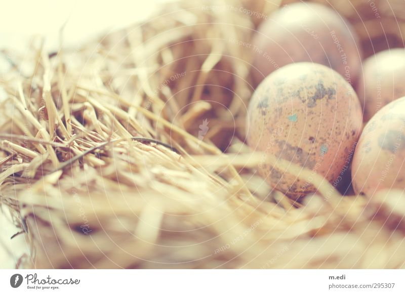 weils bald soweit ist.. Nutztier Nest Osternest Wachtelei ästhetisch braun Heu Farbfoto Innenaufnahme Tag