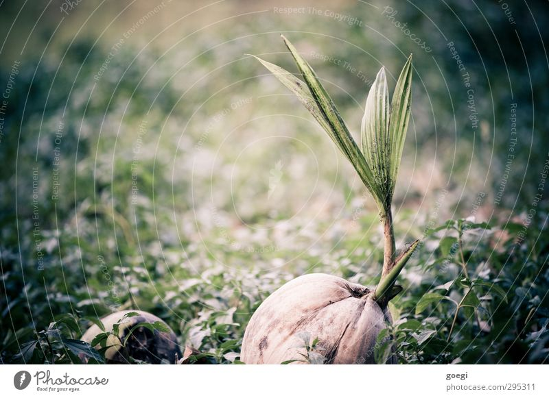 von Nüssen und Trieben Natur Ferien & Urlaub & Reisen grün Pflanze Baum Einsamkeit Blatt Leben Gras klein natürlich braun Wachstum Beginn Sträucher exotisch
