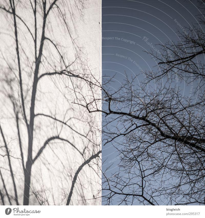 Schattenbaum Himmel Wolkenloser Himmel Winter Baum Mauer Wand blau grau schwarz Schattenspiel Farbfoto Gedeckte Farben Außenaufnahme Menschenleer Tag