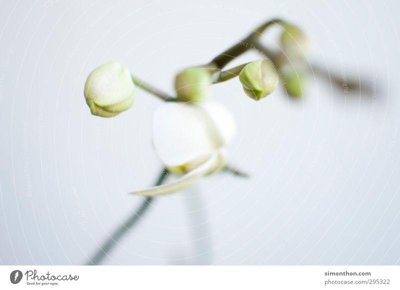 Frühling Pflanze Blume Orchidee Blüte Topfpflanze Beginn Vergänglichkeit Wachstum Häusliches Leben Metamorphose Wandel & Veränderung Frühlingsgefühle