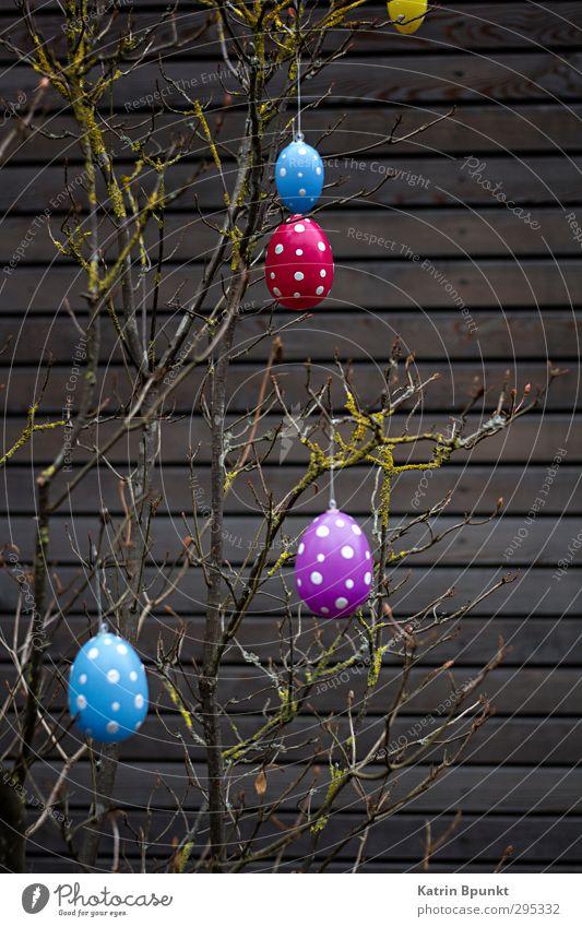 Happy E 2 Ostern blau violett rot Osterei gepunktet Farbfoto Außenaufnahme Menschenleer