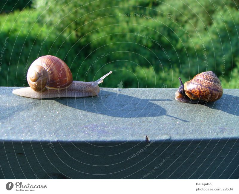 Schneckentreffen Freundschaft Verkehr Geländer Schnecke Verabredung Fühler krabbeln begegnen Schneckenhaus Zeitlupe
