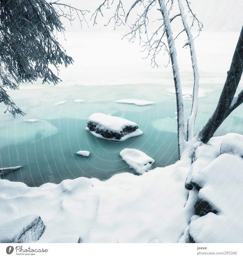 gekommen um zu bleiben Wasser Winter Wetter Eis Frost Schnee Baum Seeufer Mummelsee Stein hell kalt blau schwarz weiß ruhig Idylle Farbfoto Gedeckte Farben