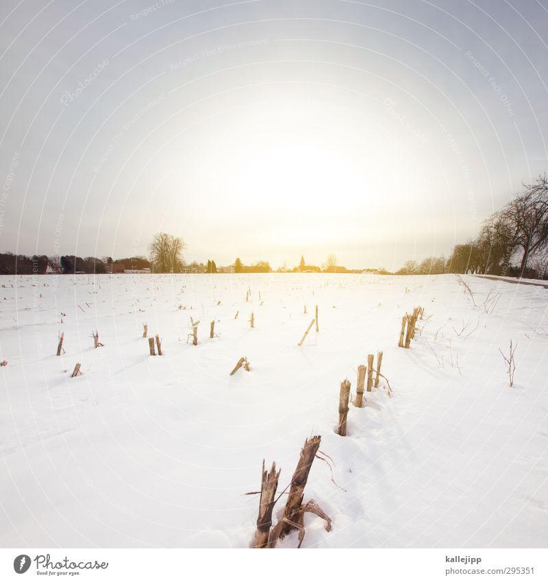 im märzen der bauer ... Landwirtschaft Forstwirtschaft Umwelt Natur Landschaft Erde Wolkenloser Himmel Sonne Sonnenaufgang Sonnenuntergang Sonnenlicht Frühling