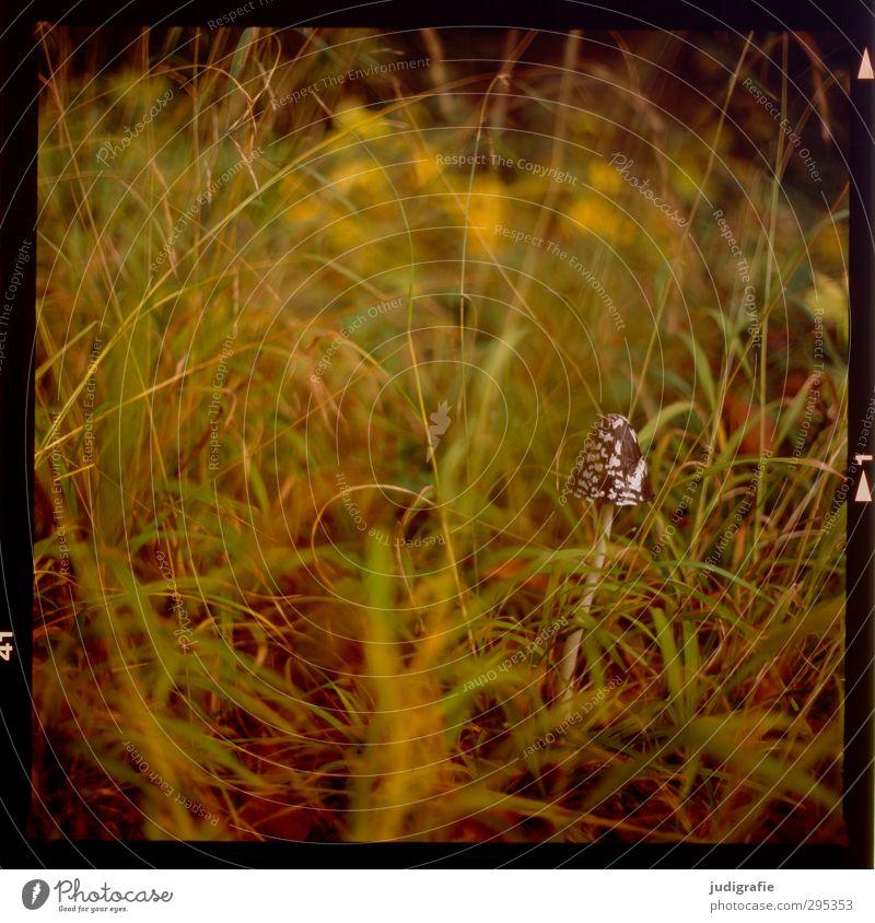 Wiese mit Pilz Natur Pflanze Wald Umwelt Wiese Leben Gras natürlich wild Wachstum nah Pilz Wildpflanze