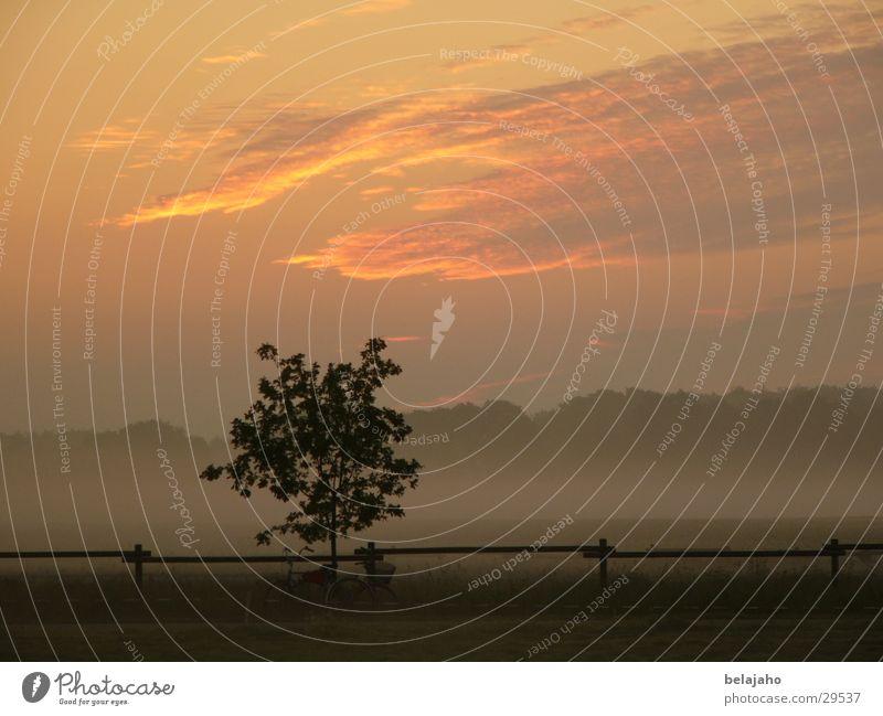Morgendämmerung Baum Sonne Wolken Feld Nebel Zaun Tau Sommermorgen