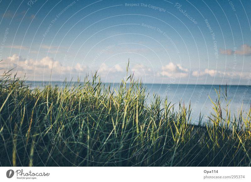 Meeresblick Umwelt Natur Landschaft Pflanze Tier Wolken Sonne Sommer Schönes Wetter Sträucher Grünpflanze Küste Strand Nordsee See Erholung Unendlichkeit blau