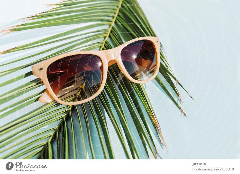 beige Sonnenbrille auf Palmblatt, Reisekonzeptobjekt Stil Design Ferien & Urlaub & Reisen Sommer Strand Mode Accessoire Kunststoff heiß hell modern oben retro