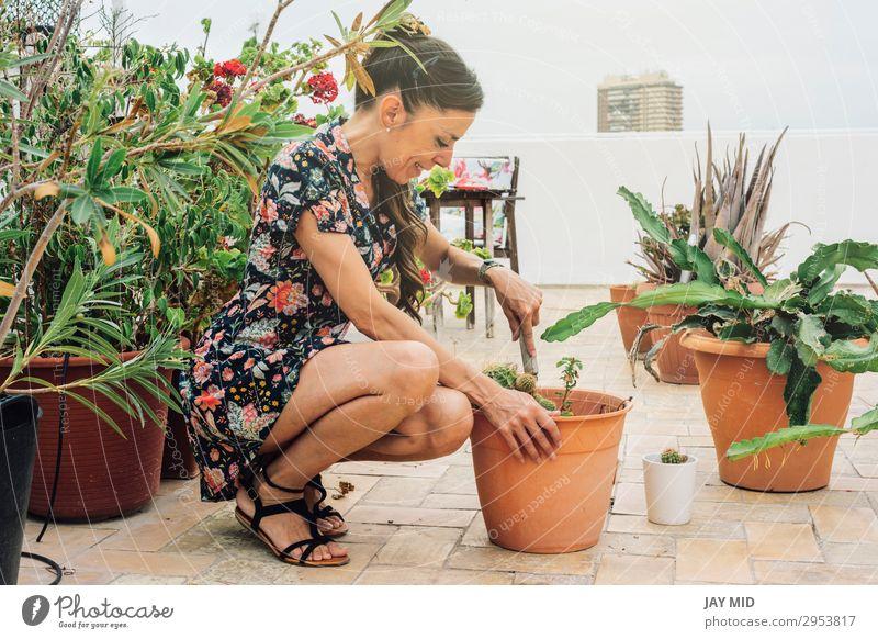 Gärtnerin, die Kaktuspflanzen in einen Topf pflanzt. Freizeit & Hobby Sommer Garten Arbeit & Erwerbstätigkeit Gartenarbeit Werkzeug Frau Erwachsene Hand Natur