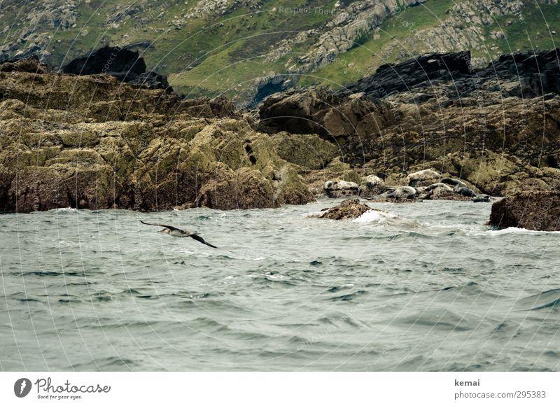 Felsiges Ufer Natur grün Wasser Sommer Meer Landschaft Tier Umwelt Küste natürlich Felsen Vogel fliegen Wellen Wildtier Insel