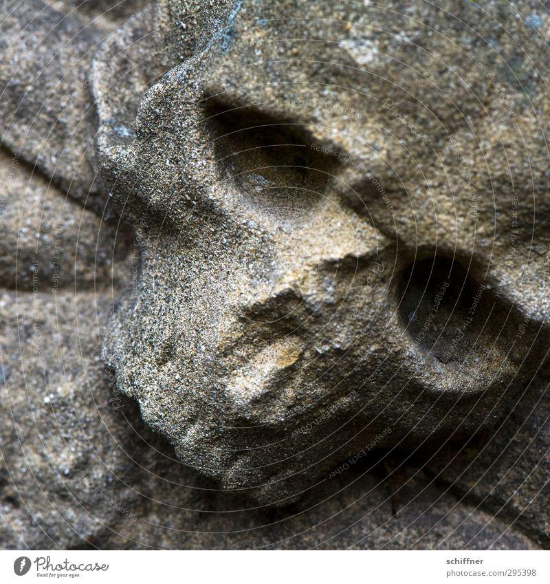 Alte Grabsteine | Todesblick Zeichen alt hässlich kaputt Schmerz Traurigkeit Verfall Vergänglichkeit Todesbote Schädel Tierschädel Stein Trauer Todesangst