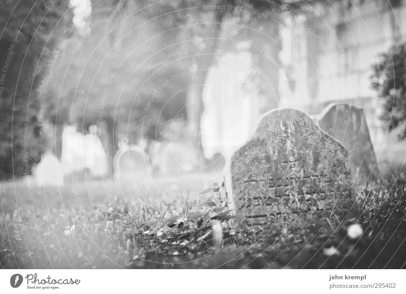 Alte Grabsteine | Venezia I Venedig Italien Hafenstadt Altstadt Friedhof Sehenswürdigkeit Stein Schriftzeichen dunkel historisch Romantik Mitgefühl trösten