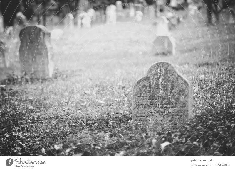 Alte Grabsteine | Venezia II Venedig Italien Friedhof Grabmal Sehenswürdigkeit Stein Schriftzeichen bedrohlich Bekanntheit dunkel historisch Mitgefühl friedlich