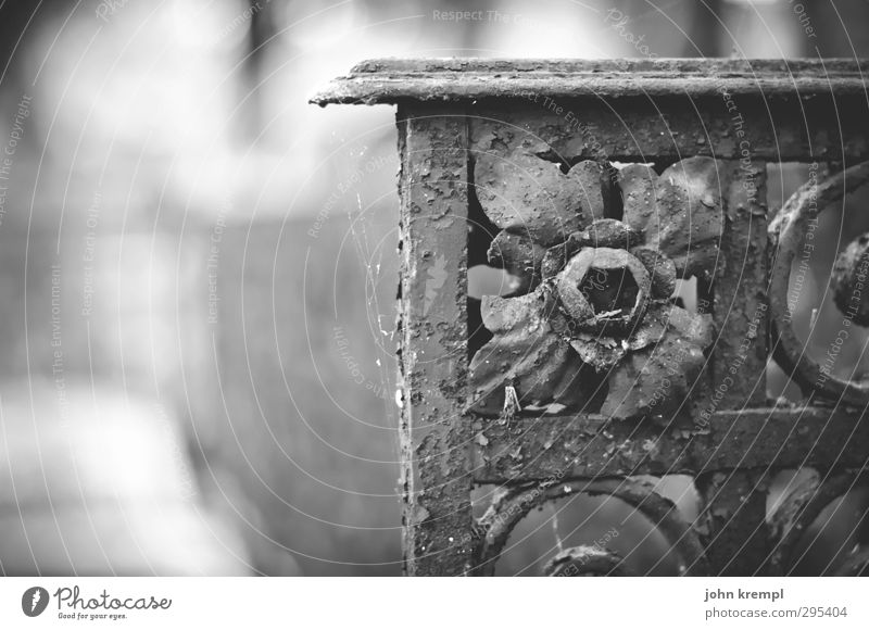Alte Grabsteine | Venezia III dunkel Senior Tod Traurigkeit Religion & Glaube Idylle Wandel & Veränderung Vergänglichkeit Romantik Trauer Italien historisch