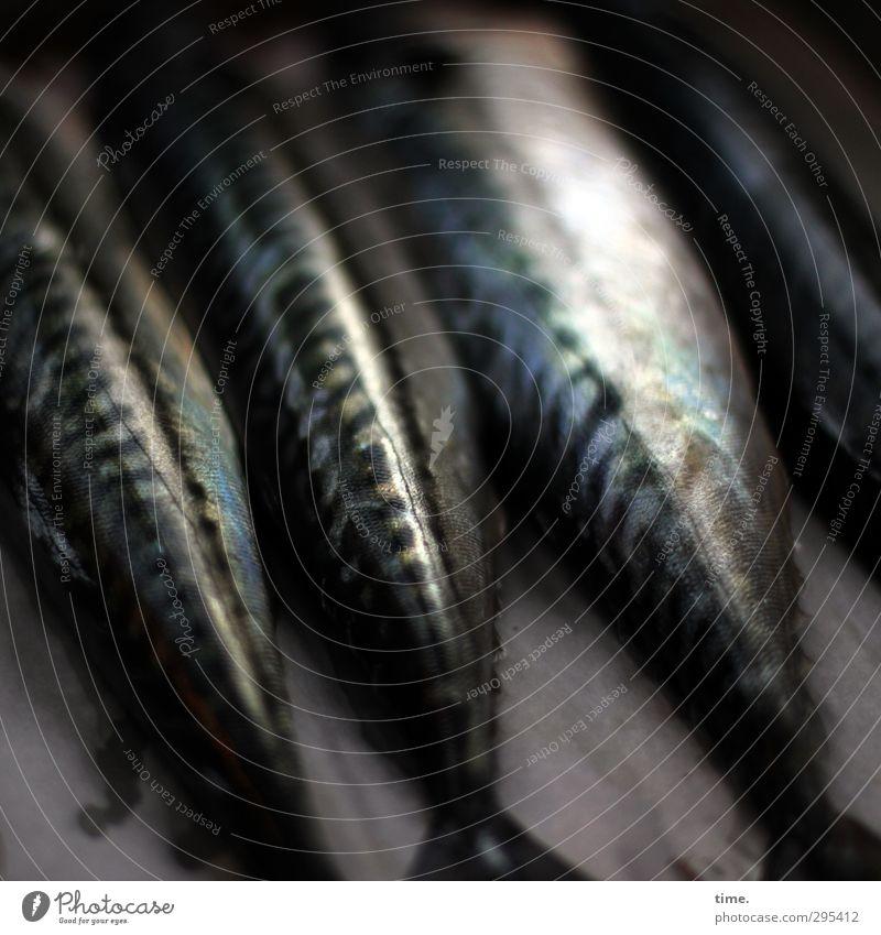 Freitag ist Fischtag Nutztier Schuppen Makrele 4 Tier ästhetisch glänzend Tod Totenstarre Totes Tier Lebensmittel Farbfoto Detailaufnahme Menschenleer