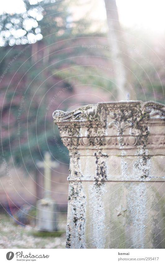 Alte Grabsteine   Im Licht Baum Stadtzentrum Friedhof Hoppenlaufriedhof Stein Kreuz leuchten alt hell Tod verwittert erinnern Farbfoto Gedeckte Farben