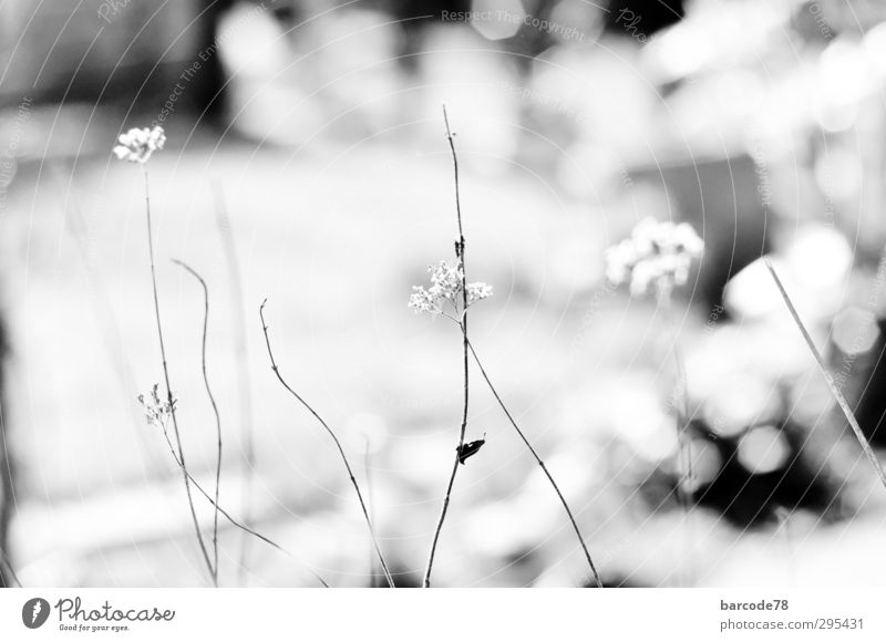 Zeit für Frühling Natur alt weiß Pflanze Einsamkeit Blume Tier schwarz Senior Traurigkeit Bewegung Tod Garten träumen Stimmung Sträucher