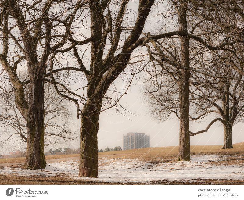 outside the city Stadt Baum Einsamkeit Landschaft Winter Umwelt dunkel Wiese Schnee oben braun Park Hochhaus Zukunft trist bedrohlich