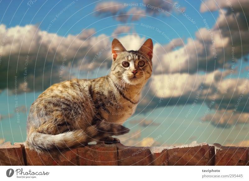 Katze auf dem Dach stehend Gesicht Natur Tier Urelemente Luft Himmel Wolken Gewitterwolken Unwetter Pelzmantel Behaarung Haustier 1 klein niedlich blau braun