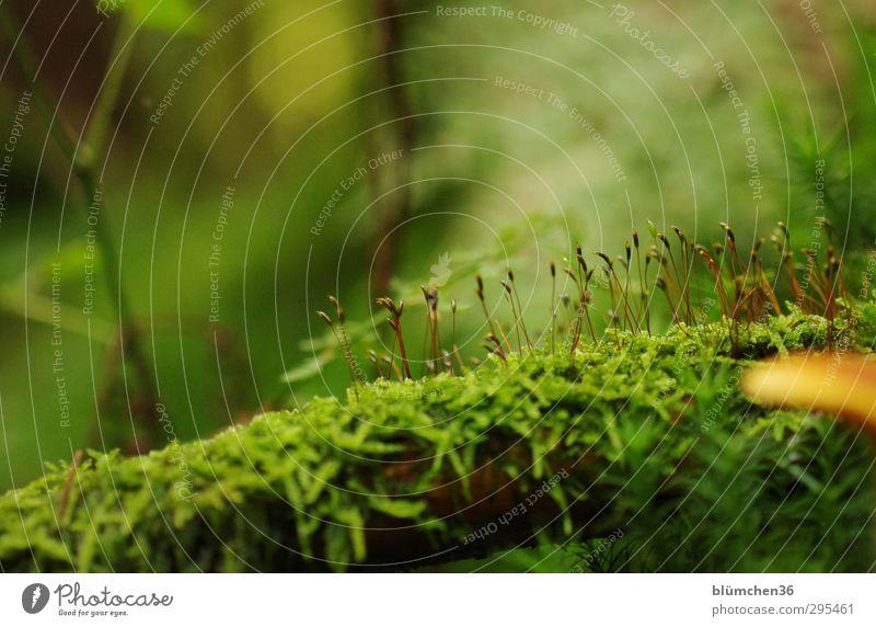 Es war einmal ... im Herbst Natur Pflanze Moos Blatt Blüte Wald Blühend liegen stehen dünn frisch klein nass weich grün Idylle Umwelt Wachstum Grundlage