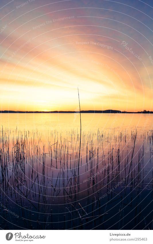 7.00 Uhr am Seepark Himmel Natur Wasser Pflanze Baum Sonne Landschaft Wolken Winter Umwelt leuchten Schönes Wetter Idylle Sträucher Seeufer