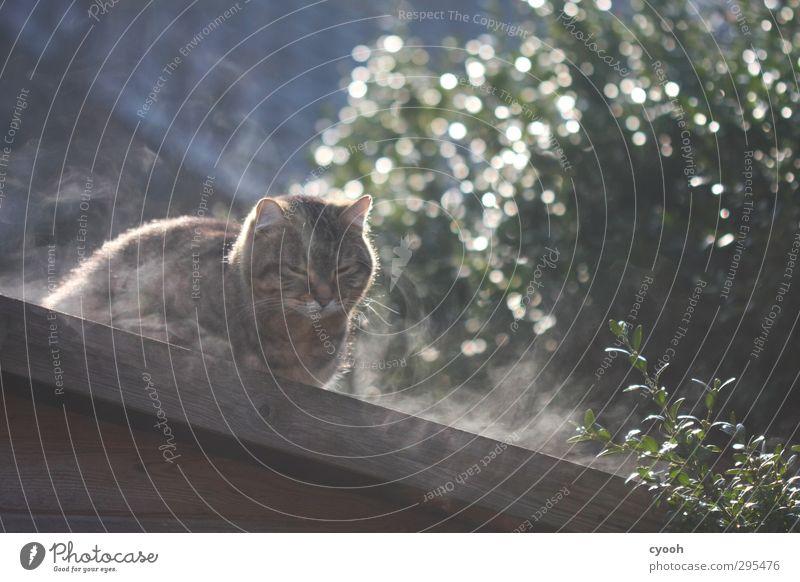 hmmm... Katze Tier ruhig Erholung kalt träumen sitzen Nebel Zufriedenheit warten leuchten frisch nass schlafen niedlich weich