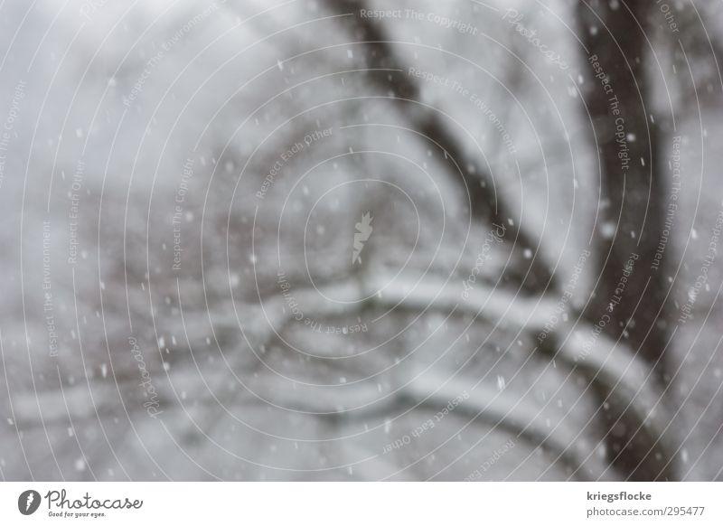 Ostern 2013 Natur Tier Winter Klima Klimawandel Nebel Eis Frost Schnee Schneefall Baum kalt weiß Unlust Sehnsucht stagnierend Schneeflocke Farbfoto