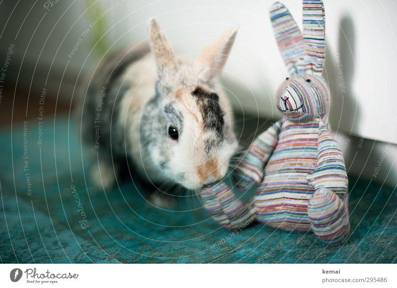 Hasenfuß Tier Freundschaft sitzen niedlich Ostern Neugier Fell Tiergesicht Haustier Hase & Kaninchen Geruch gestreift Sympathie Tierliebe Osterhase Zwergkaninchen