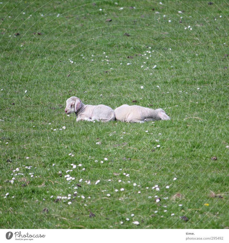 Hiddensee   bummelich & muggelich Natur nackt Tier Umwelt Wiese Traurigkeit liegen Zufriedenheit Schönes Wetter Kommunizieren schlafen Vergänglichkeit genießen