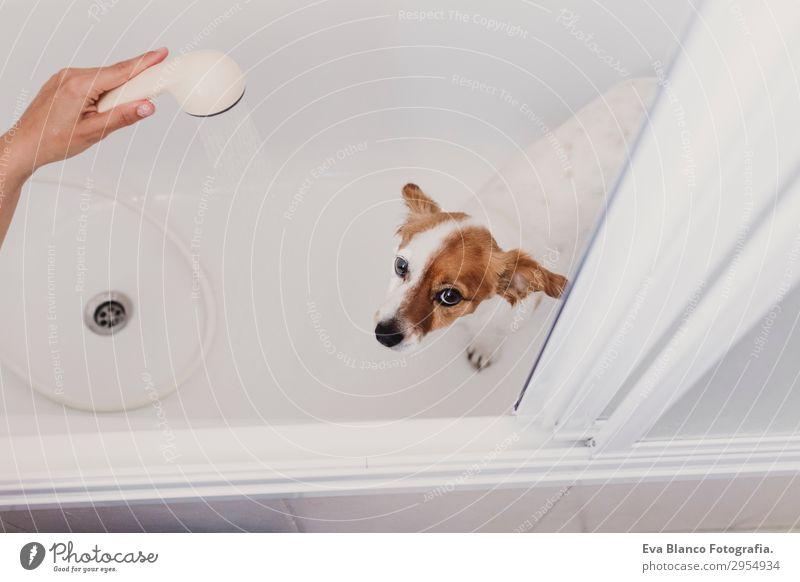 Frau Mensch Hund Jugendliche Junge Frau weiß Hand Tier Freude Erwachsene Traurigkeit lustig feminin klein Schwimmen & Baden Zusammensein