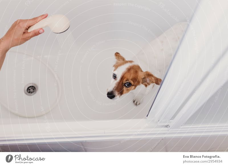 süsser schöner kleiner Hund nass in der Badewanne badenfertig Freude Freizeit & Hobby feminin Junge Frau Jugendliche Erwachsene Freundschaft Hand 1 Mensch