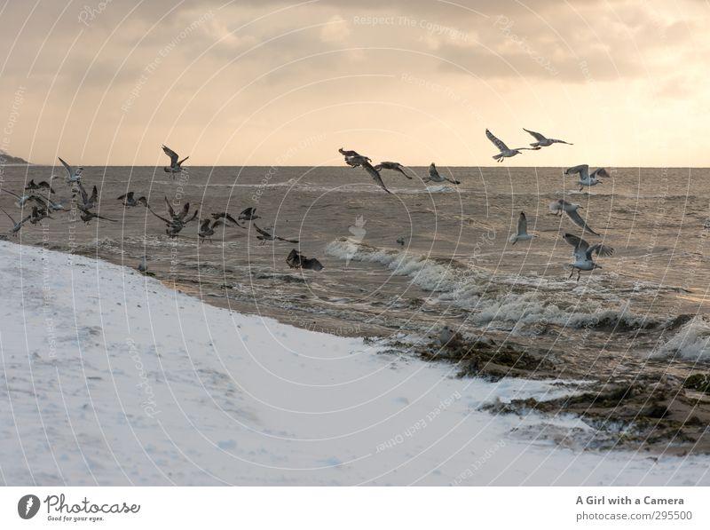 V Himmel Natur Sonne Meer Landschaft Tier Winter Umwelt Schnee Sand Horizont Vogel fliegen Wellen wild Schönes Wetter