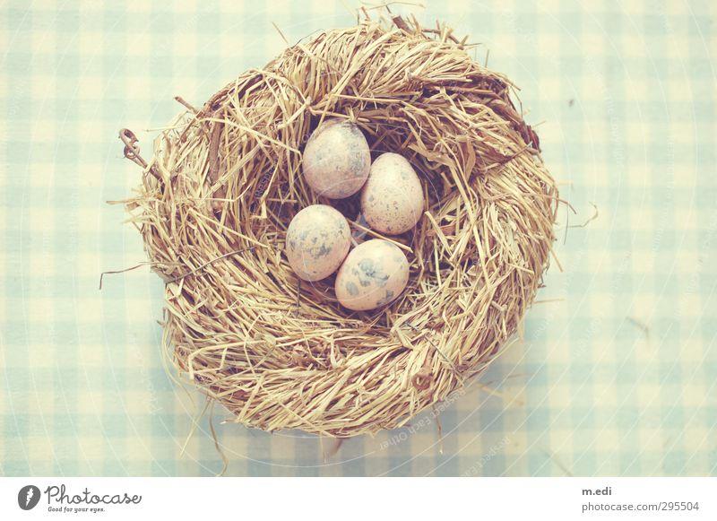 frohe ostern! Nest Ei Wachtelei Holz schön blau Farbfoto Gedeckte Farben Licht