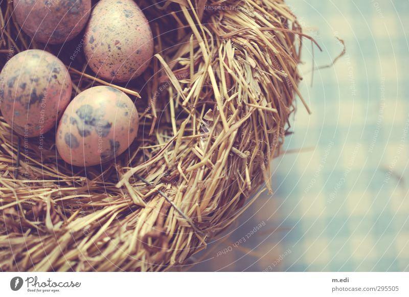 frohe ostern II Nest Ei Wachtelei Stroh schön Farbfoto Innenaufnahme Tag