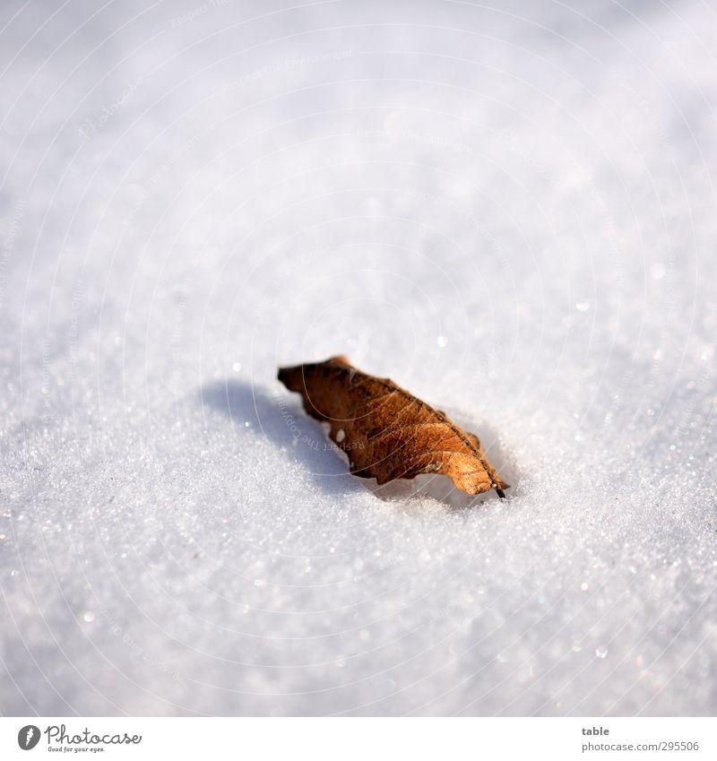 Frohe Weih... ähem Ostern Umwelt Natur Pflanze Winter Eis Frost Schnee Baum Blatt alt frieren liegen dehydrieren dunkel hell kalt Sauberkeit braun grau schwarz