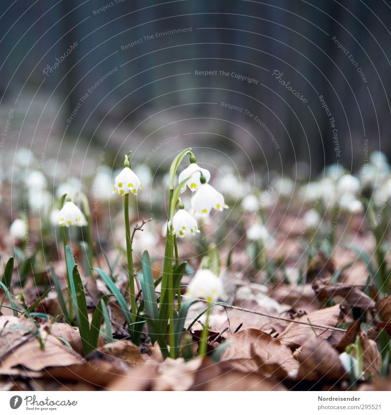 Waldfrühling Natur Pflanze Blume Leben Frühling Erde Beginn Blühend Duft Waldboden Wildpflanze Frühlingsblume Märzenbecher