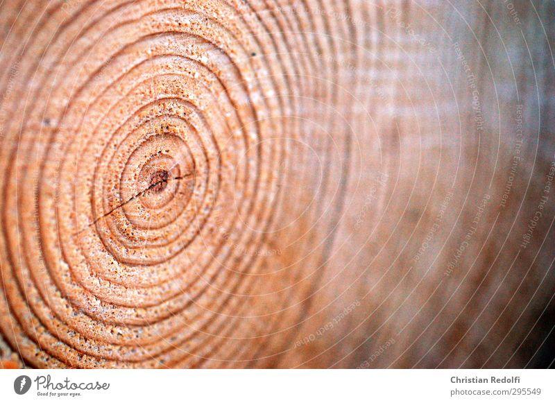 50 jahre Umwelt Natur Wald Urwald Ordnung Perspektive Ferne Baumstamm Jahresringe Holz Senior braun Material Baum fällen Baumstumpf Farbfoto Außenaufnahme
