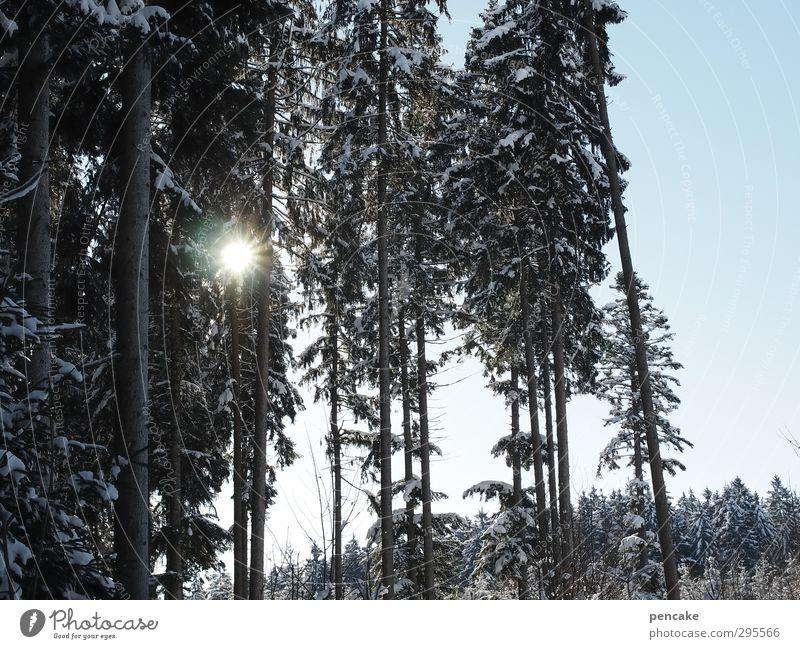 brennwert Himmel Natur Baum Landschaft Winter Wald Schnee Wärme Klima Warmherzigkeit Sehnsucht Wolkenloser Himmel Sonnenenergie Fichtenwald