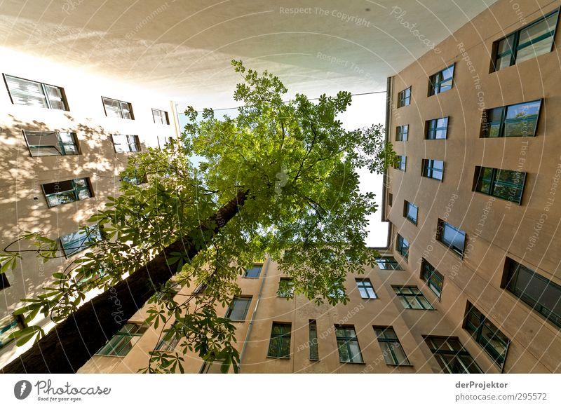 Das Fenster zum Hof 09 Umwelt Frühling Baum Stadtzentrum Menschenleer Haus Einfamilienhaus Bauwerk Gebäude Architektur Mauer Wand Gefühle Freude