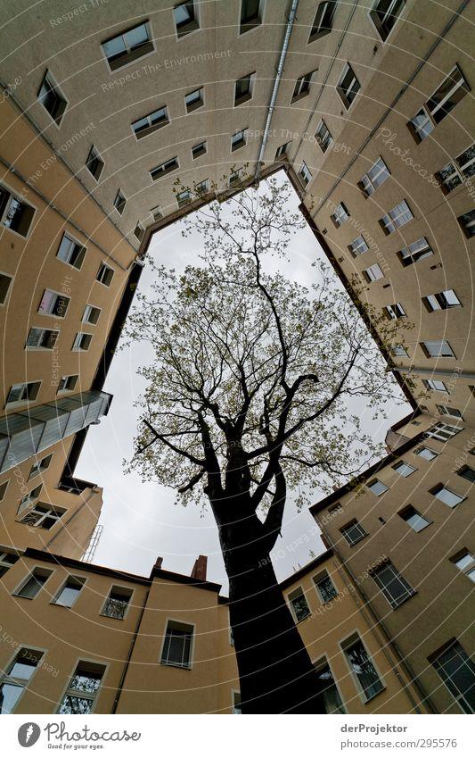 Das Fenster zum Hof 11 Himmel Natur Pflanze Baum Haus Umwelt Tod Gefühle Frühling Traurigkeit Architektur Gebäude Angst Fassade ästhetisch